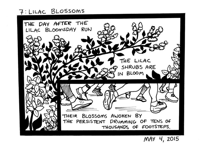 Lilac Blossoms