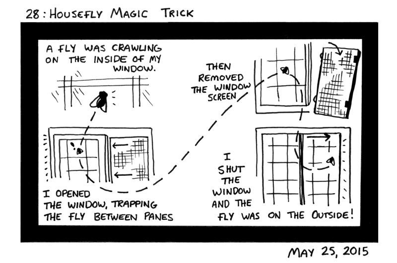 Housefly Magic Trick