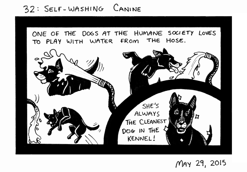 Self-washing Canine