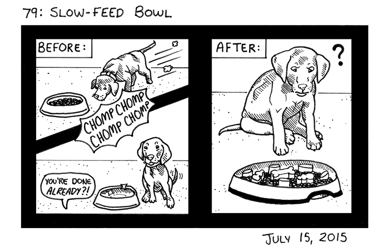Slow-Feed Bowl